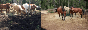 Arowhon before and after